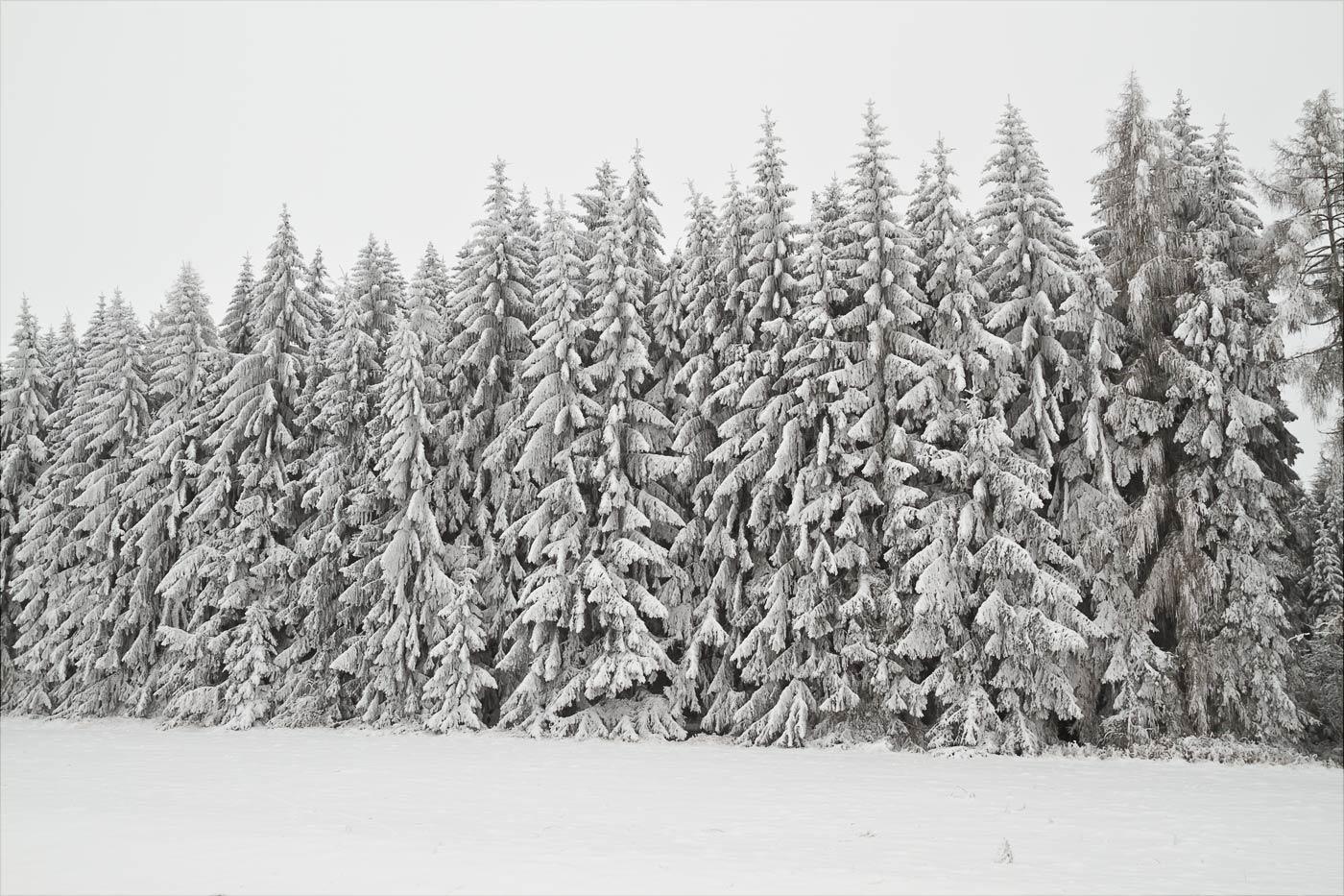 Чешская Сибирь