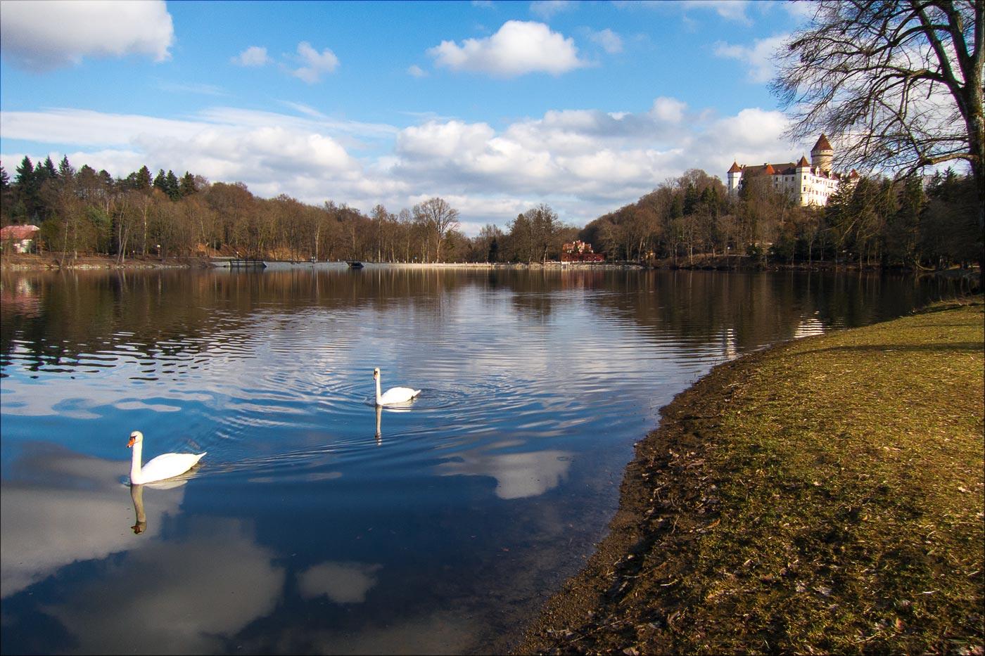 Лебеди на пруду у Конопиштского замка