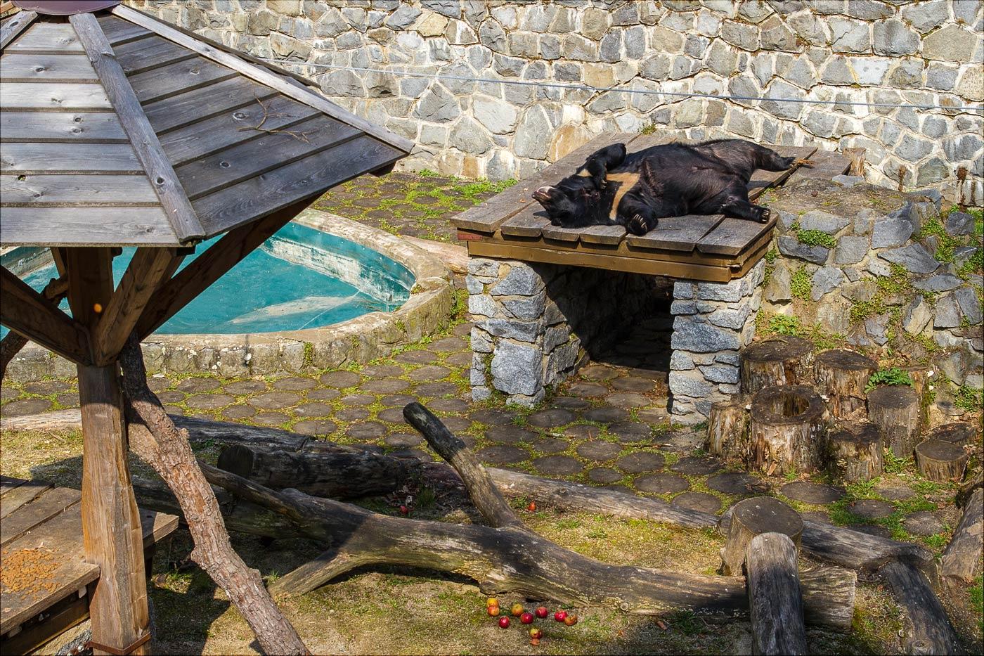 Медведь у замка Конопиште греется на солнышке