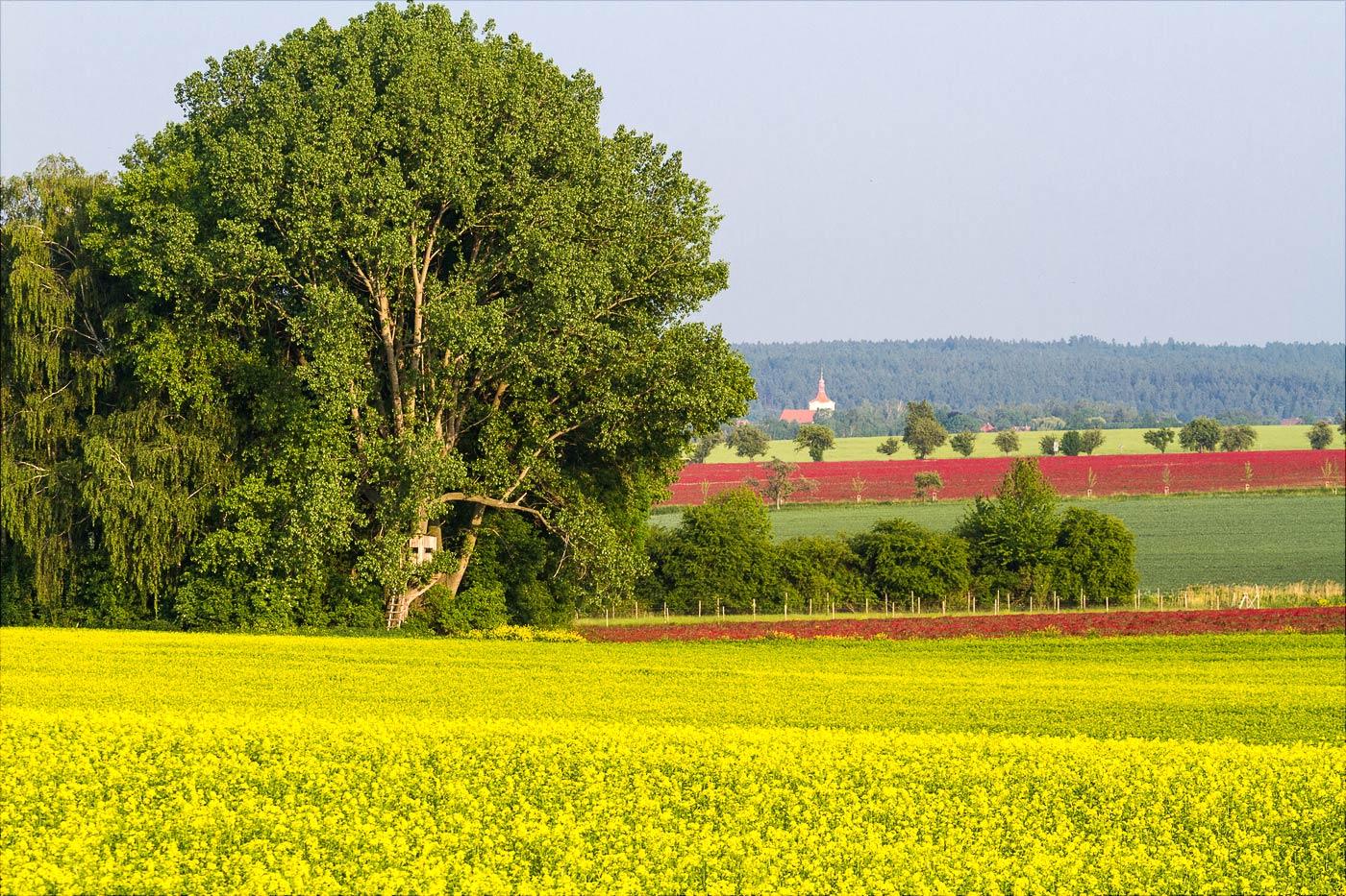 Цветущие поля у Праги