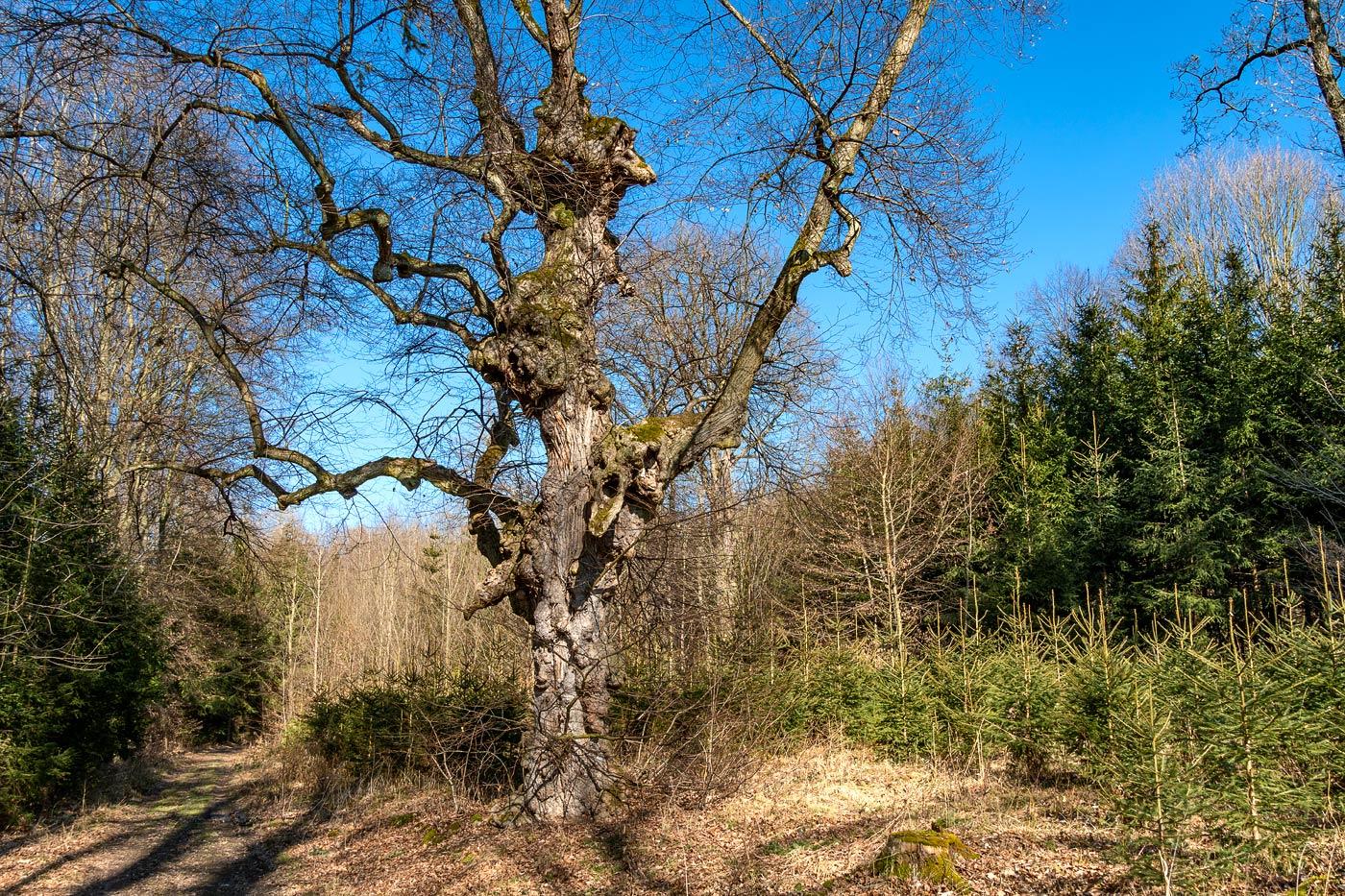 Дерево у туристской тропы