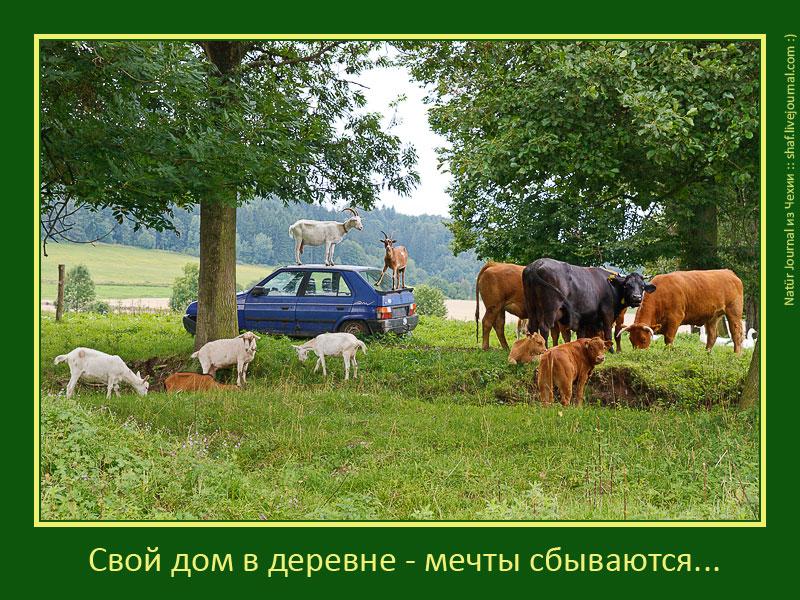 20100807-153011_Morava_d4
