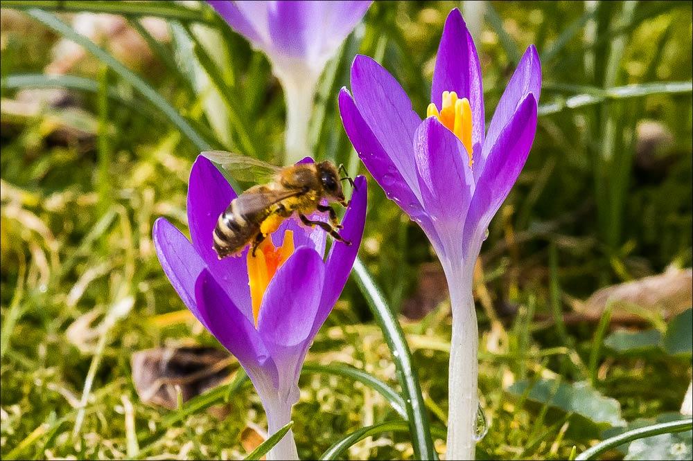 Чехия. Теплая весна в Пругоницком парке