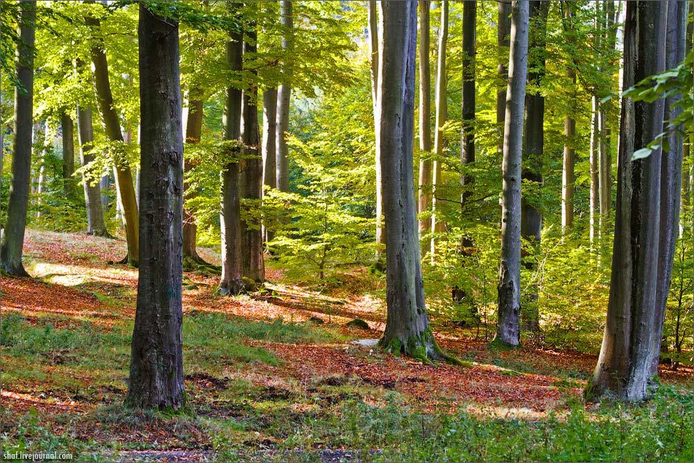 Заповедный буковый лес в национальной природной резервации Водерадске Бучины недалеко от Праги в Чехии