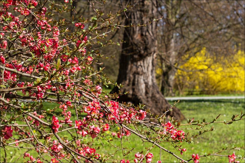 Чехия, Кромержиж (Kroměříž), дворцовый парк (Podzámecká zahrada), весеннее цветение