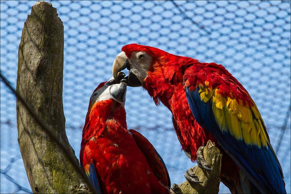 Чехия, Моравия, попугаи в зоопарке Злин ( (Zoo Zlin)