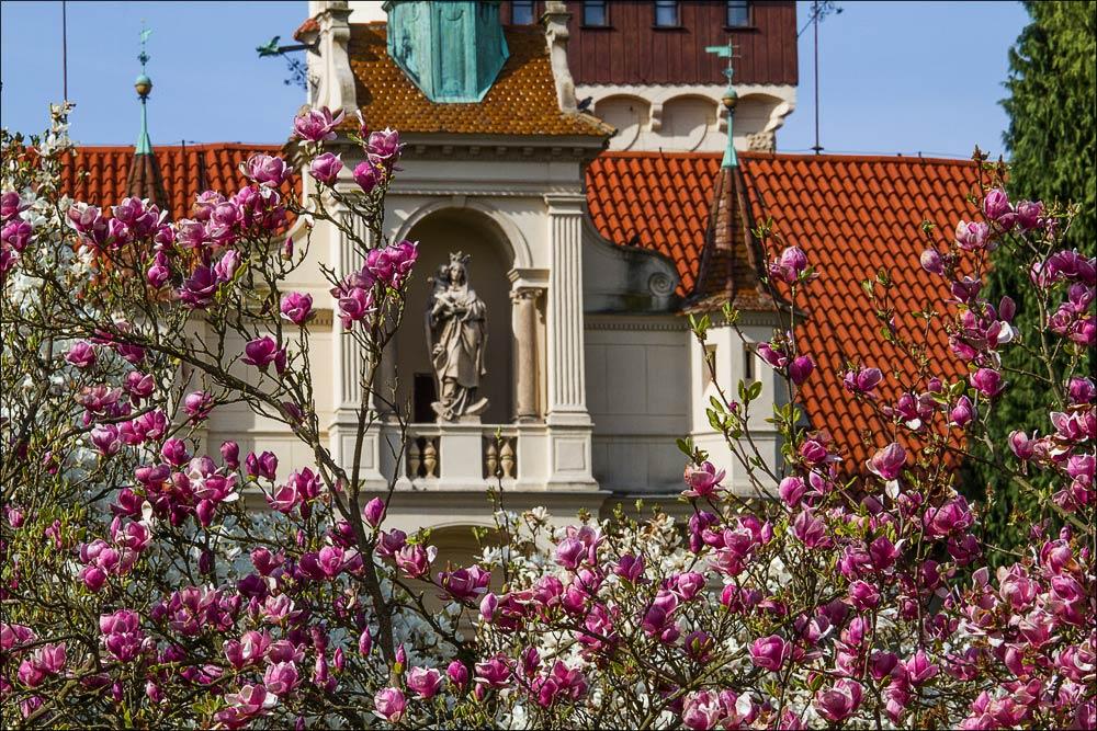 Чехия, вид на башню замка Пругонице у Праги (Průhonický zamek) в весеннем цветении магнолий