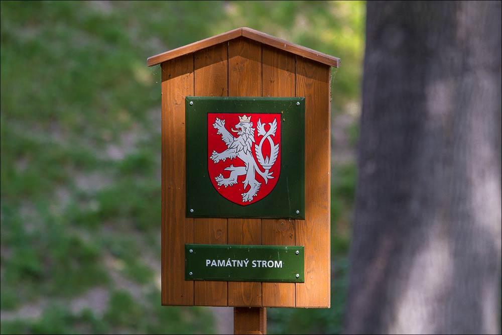 http://countryczech.com/wp-content/uploads/2015/05/20150525-105159_Pamatny_strom.jpg