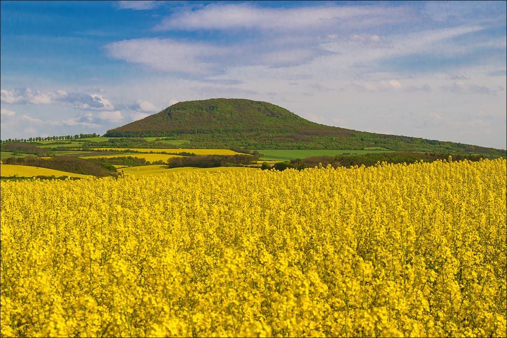 Чехия, гора Ржип (Hora Říp) весной, среди цветущего рапса