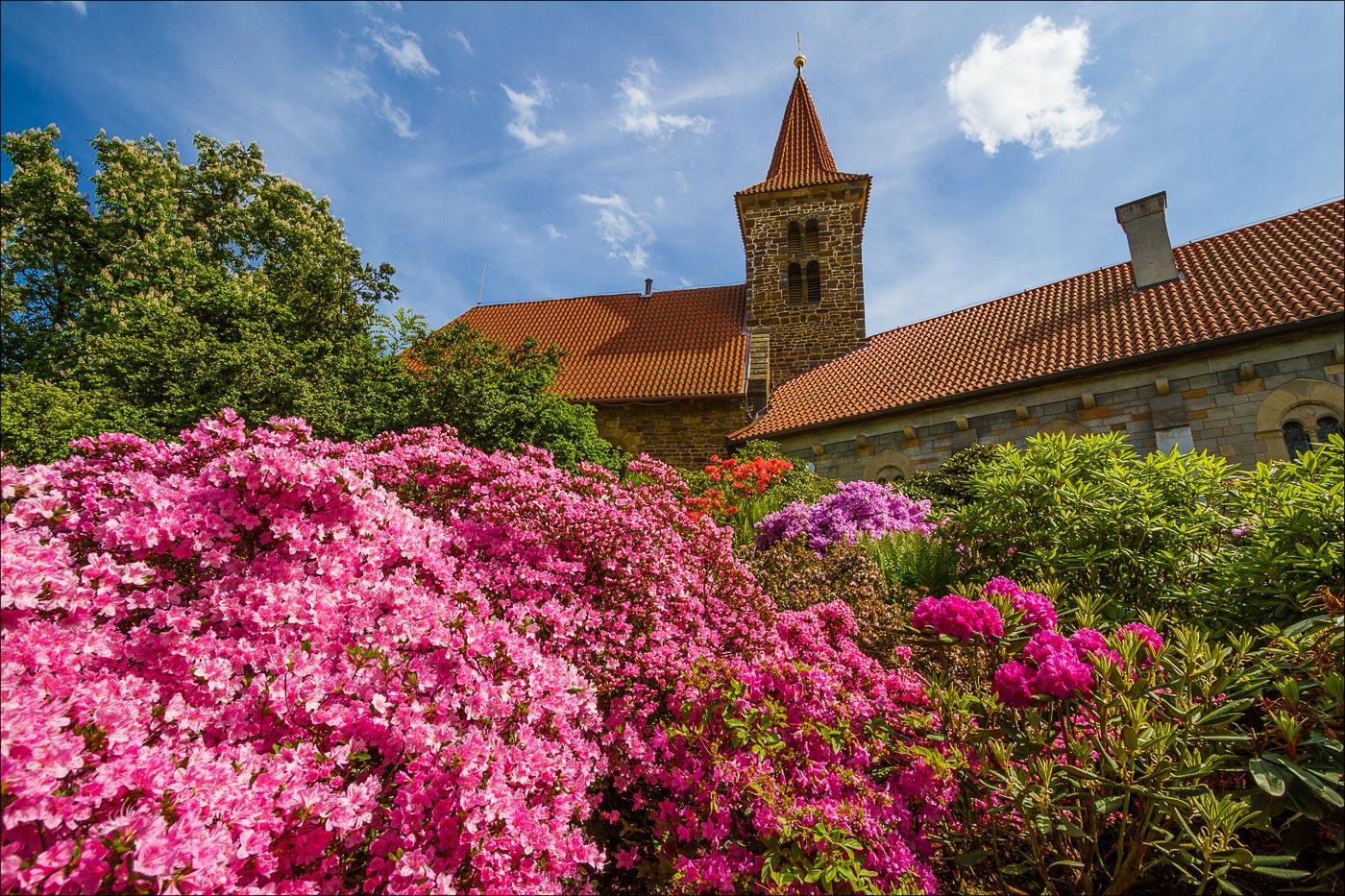 Чехия. Пругоницкий замок, цветение рододендронов