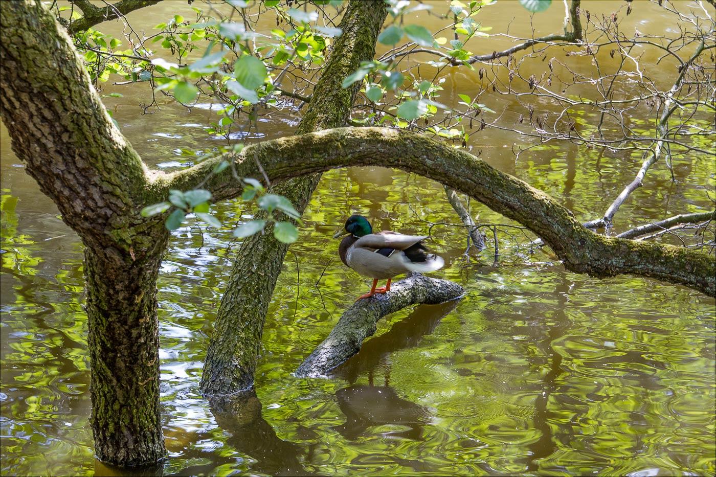 Замковый пруд в Пругоницком парке, Чехия