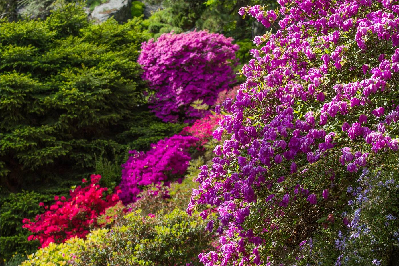 Весеннее цветение в Пругоницком парке, Чехия
