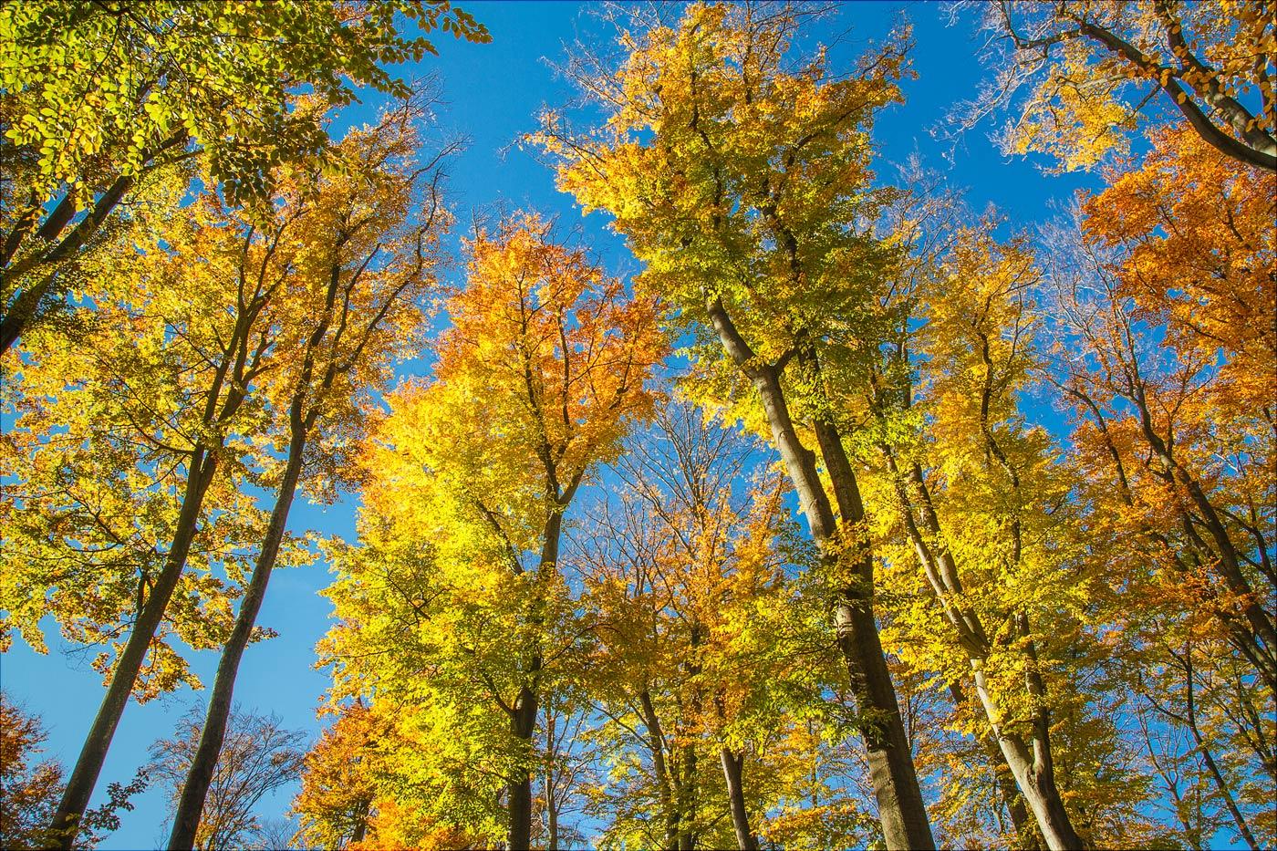 Осень в буковом лесу, Водерадске Бучины