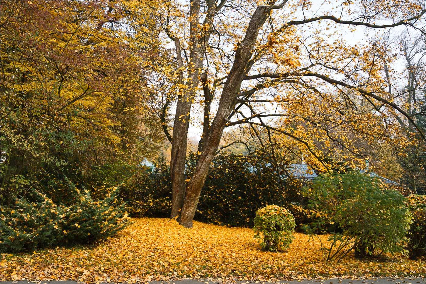 Листопад, поздняя осень в зоопарке Злин, Чехия, Моравия