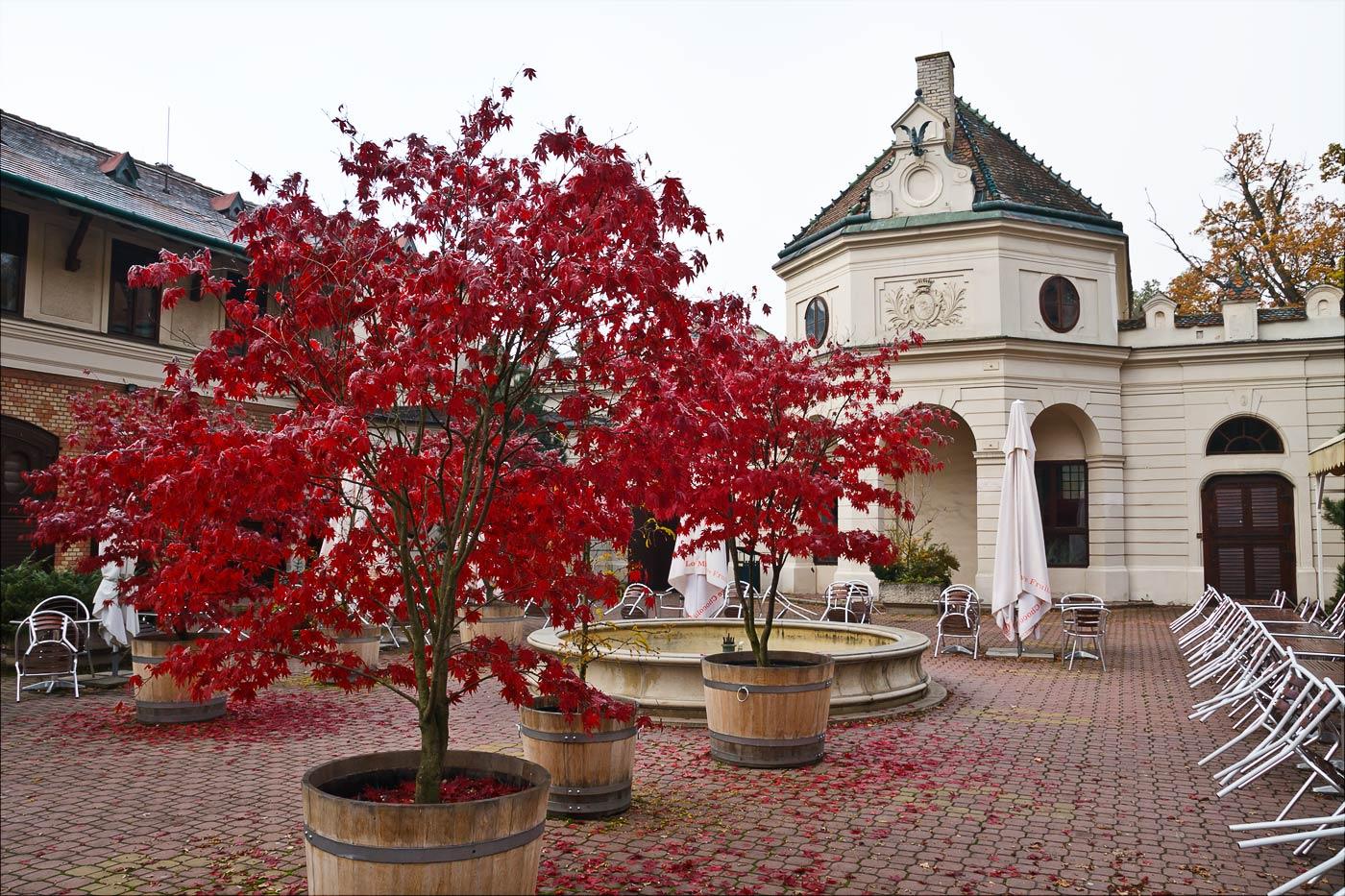 Красные осенние клены в зоопарке Злин, Моравия, Чехия