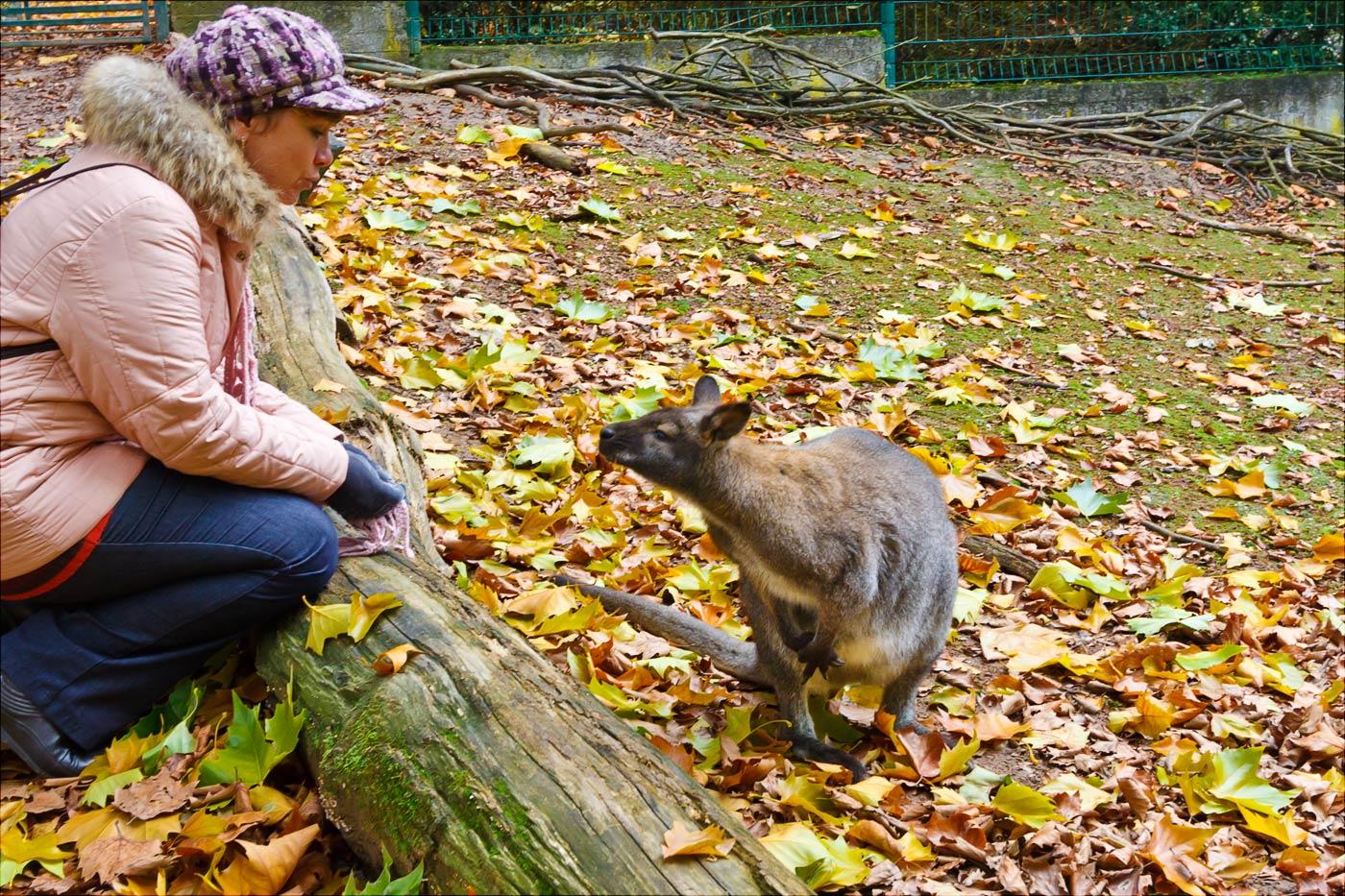 Прогулка с кенгуру в зоопарке Злин, Чехия