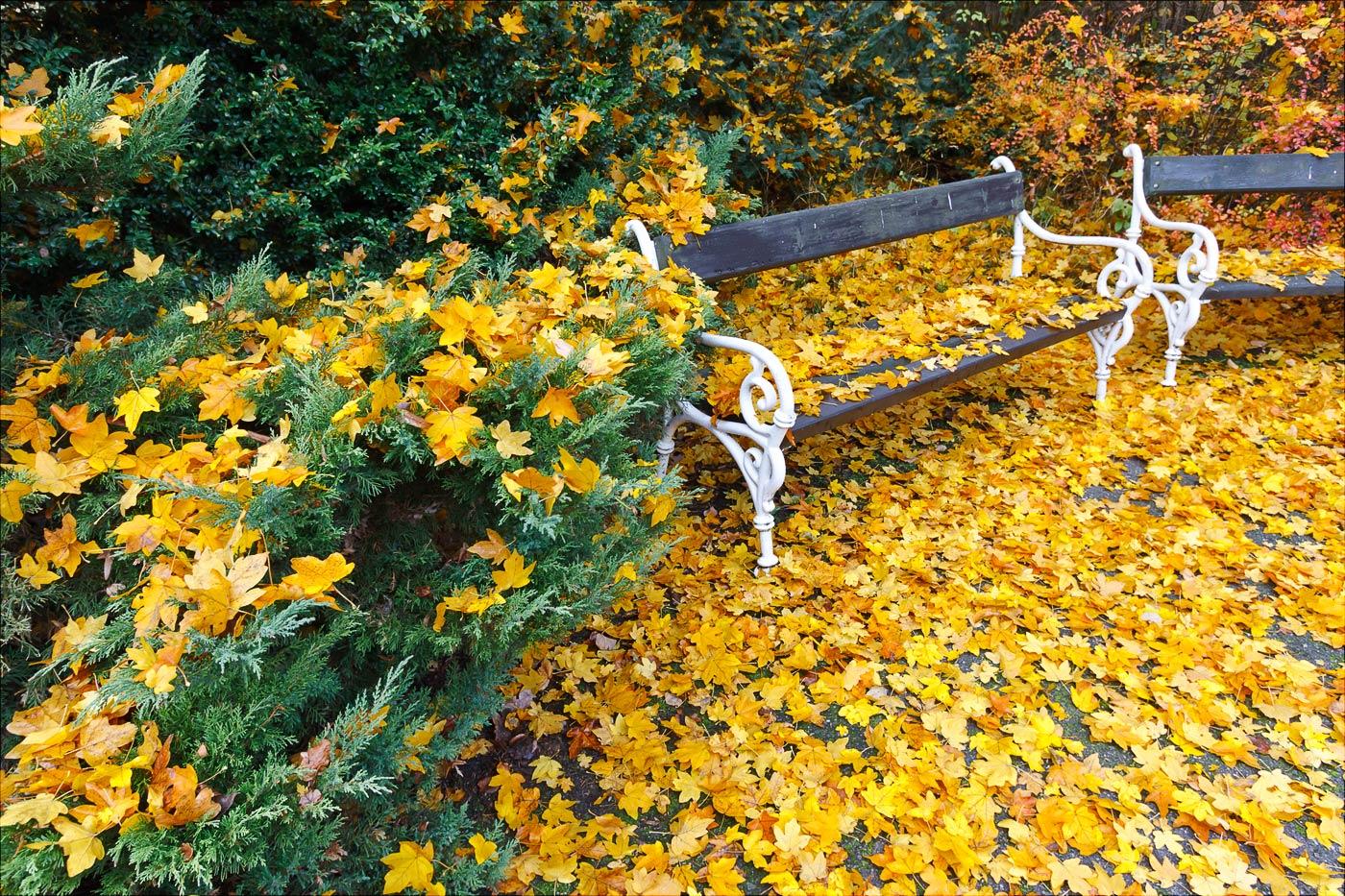 Листопад, поздняя осень в зоопарке Злин, Чехия