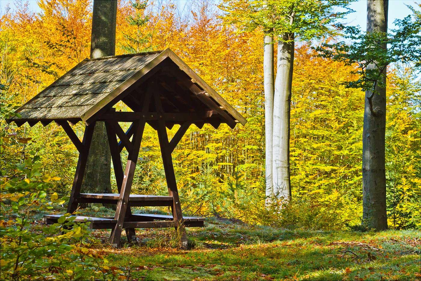 Буковый лес Водерадске бучины, Чехия