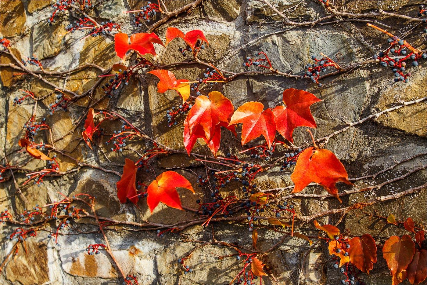 Последние осенние листья