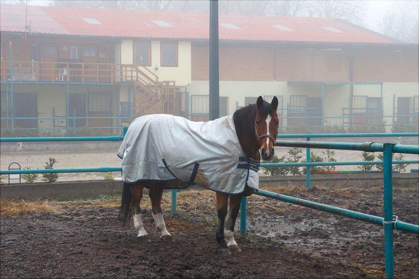 Конь в пальто, пансион Kogl у Вены, Австрия