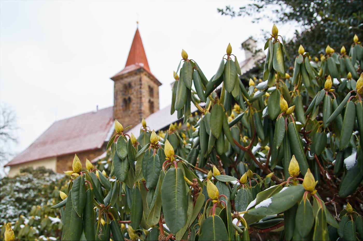 Зима в Пругонице