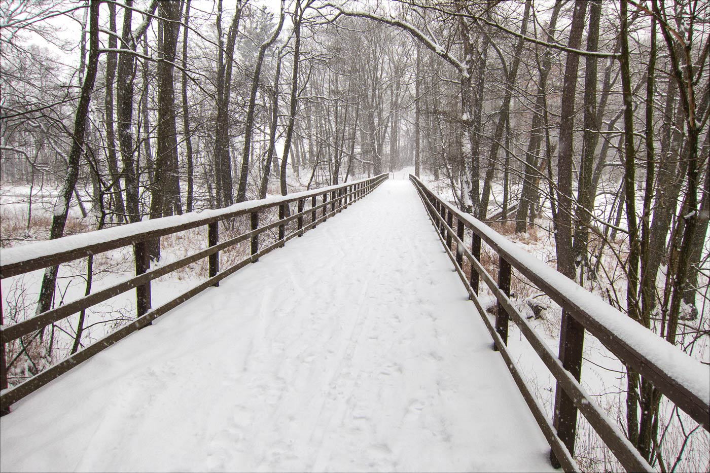 Зимняя прогулка по Конопиштскому парку