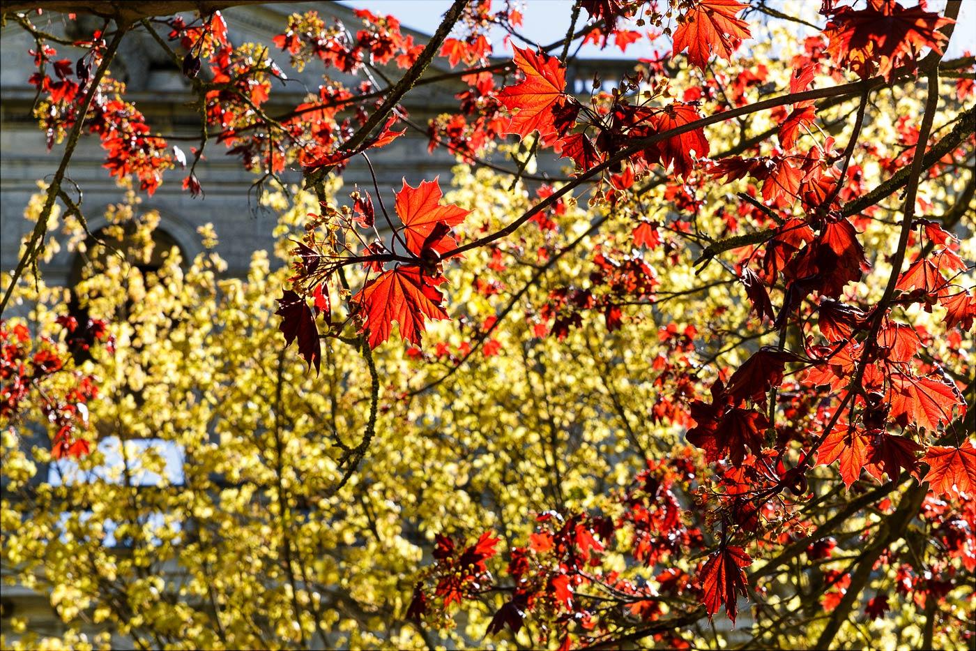 Первая весенняя листва