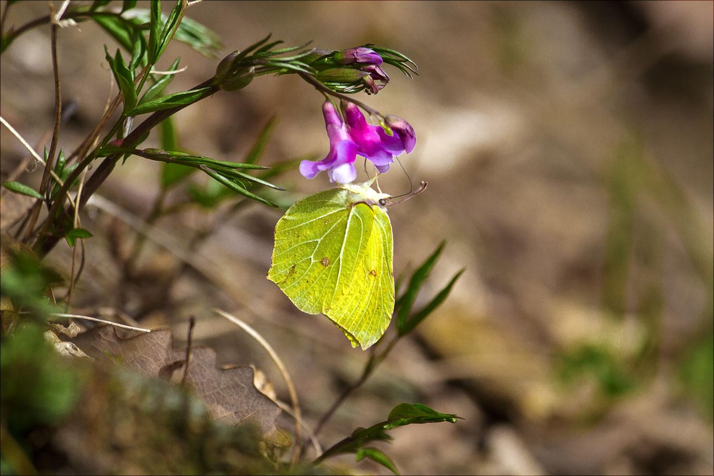 Первые бабочки в этом году