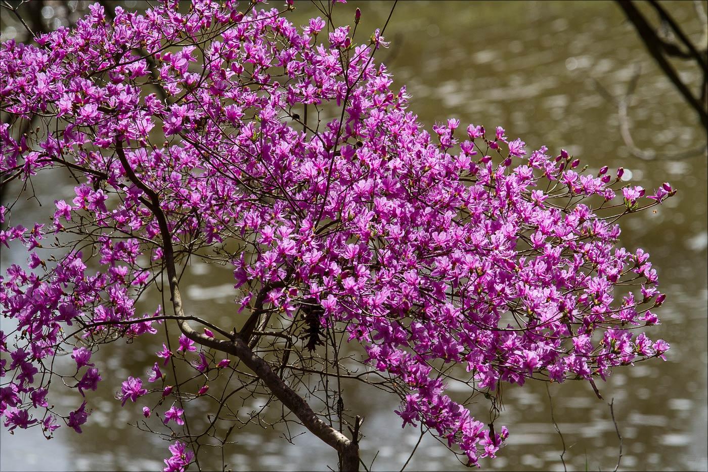 Цветение в Пругоницком парке