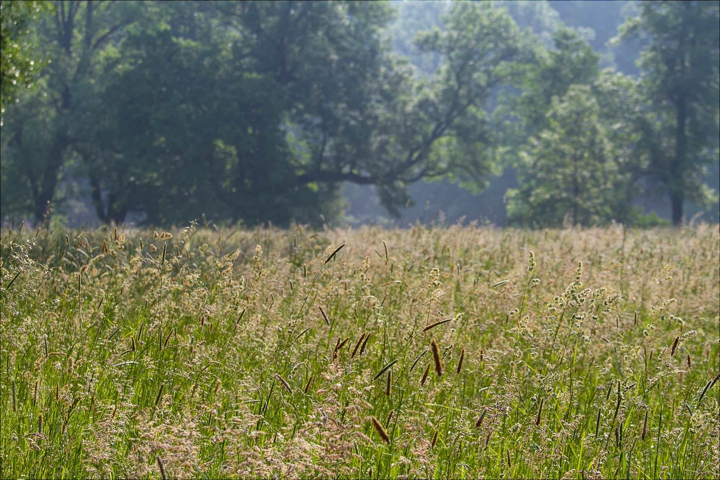 Луга в Пругоницком парке