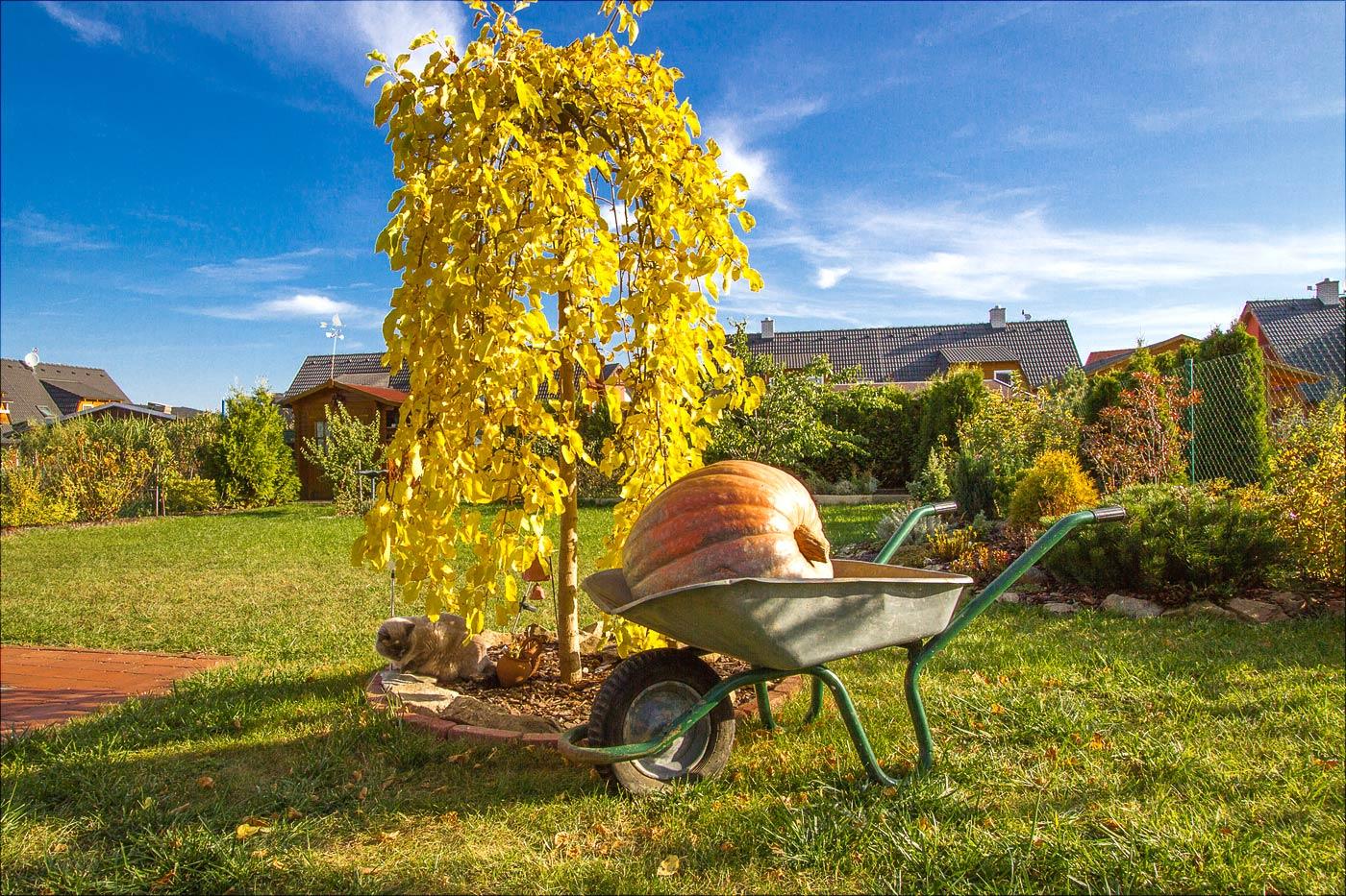 Осень в нашем саду