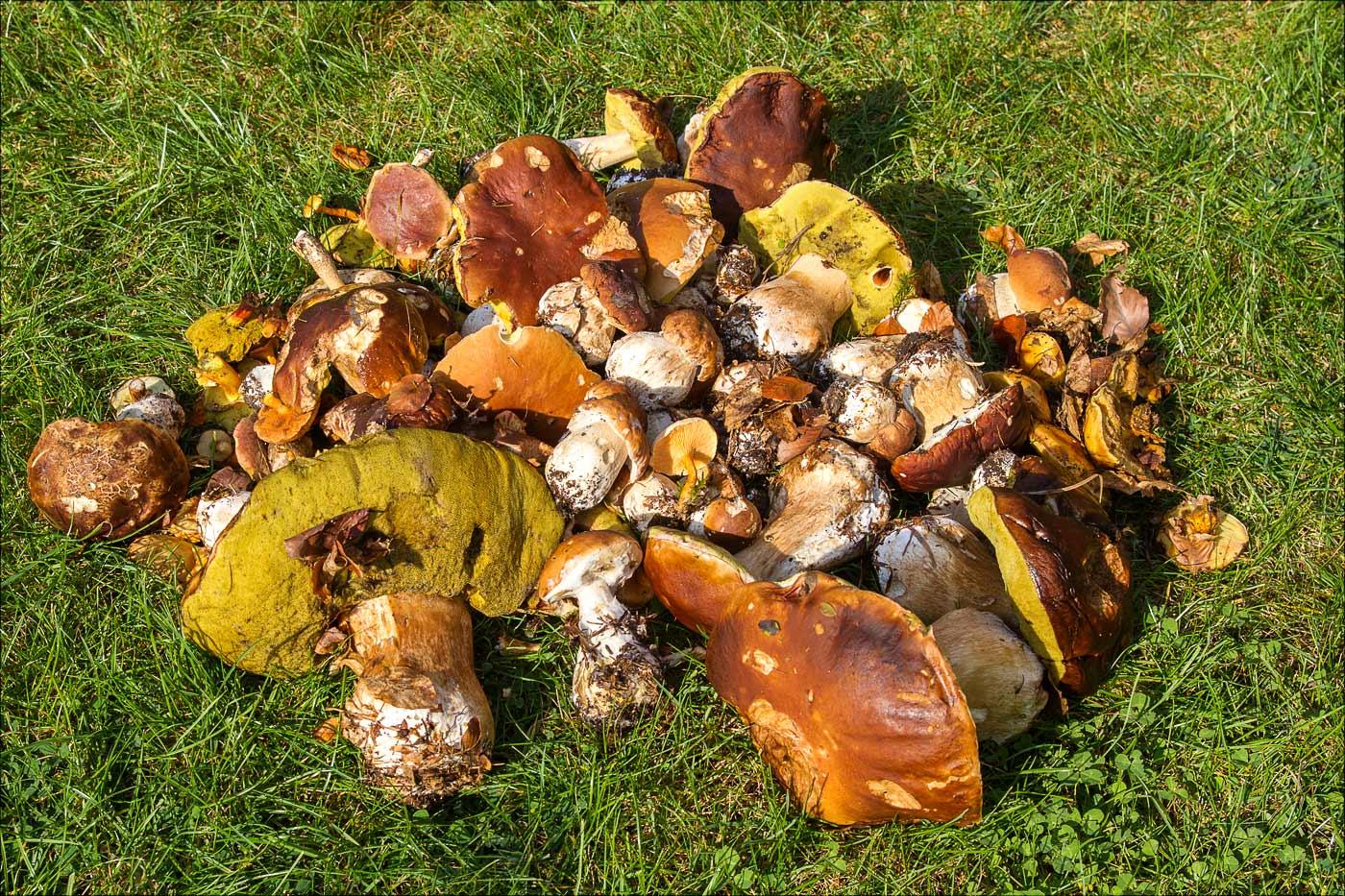 Поздние грибы