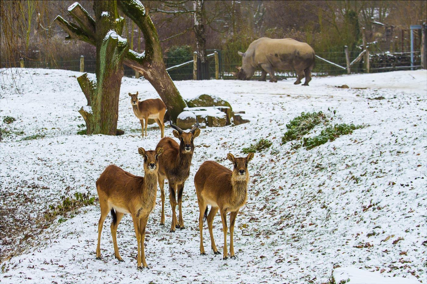 Зима в зоопарке Злин