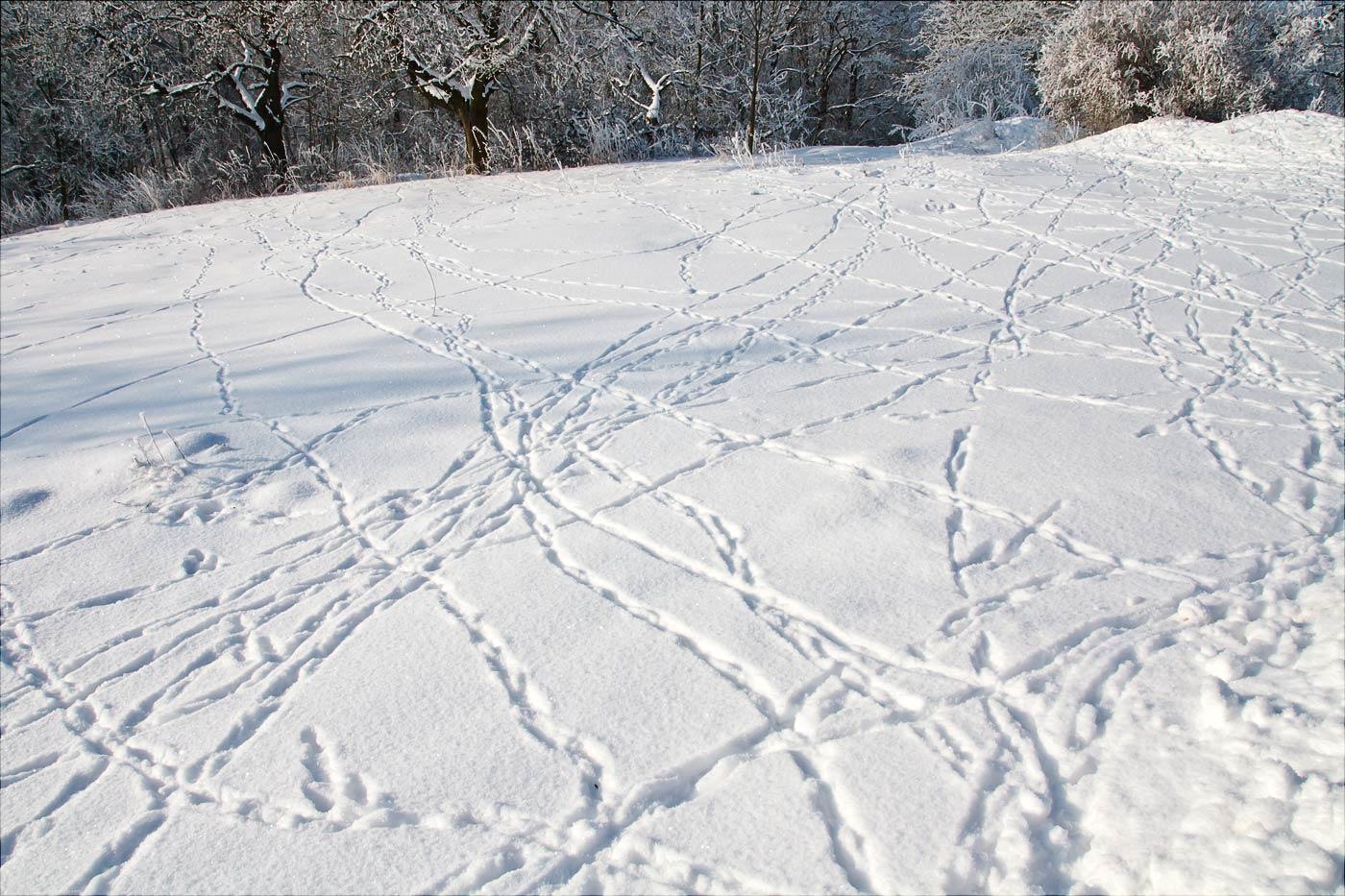 Заячьи следы на снегу у костела на Хвойне