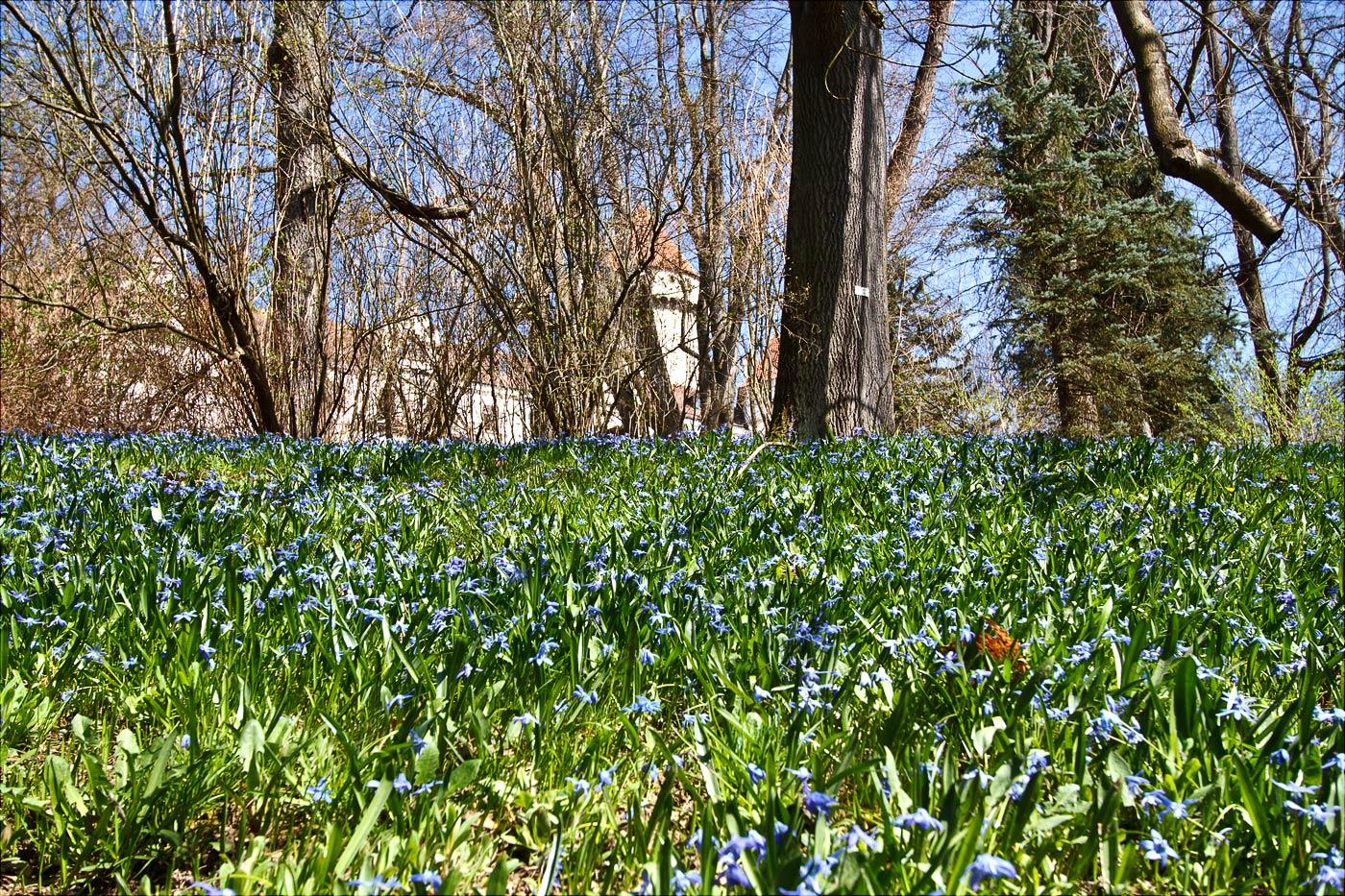 Весенние цветы у стен замка Конопиште