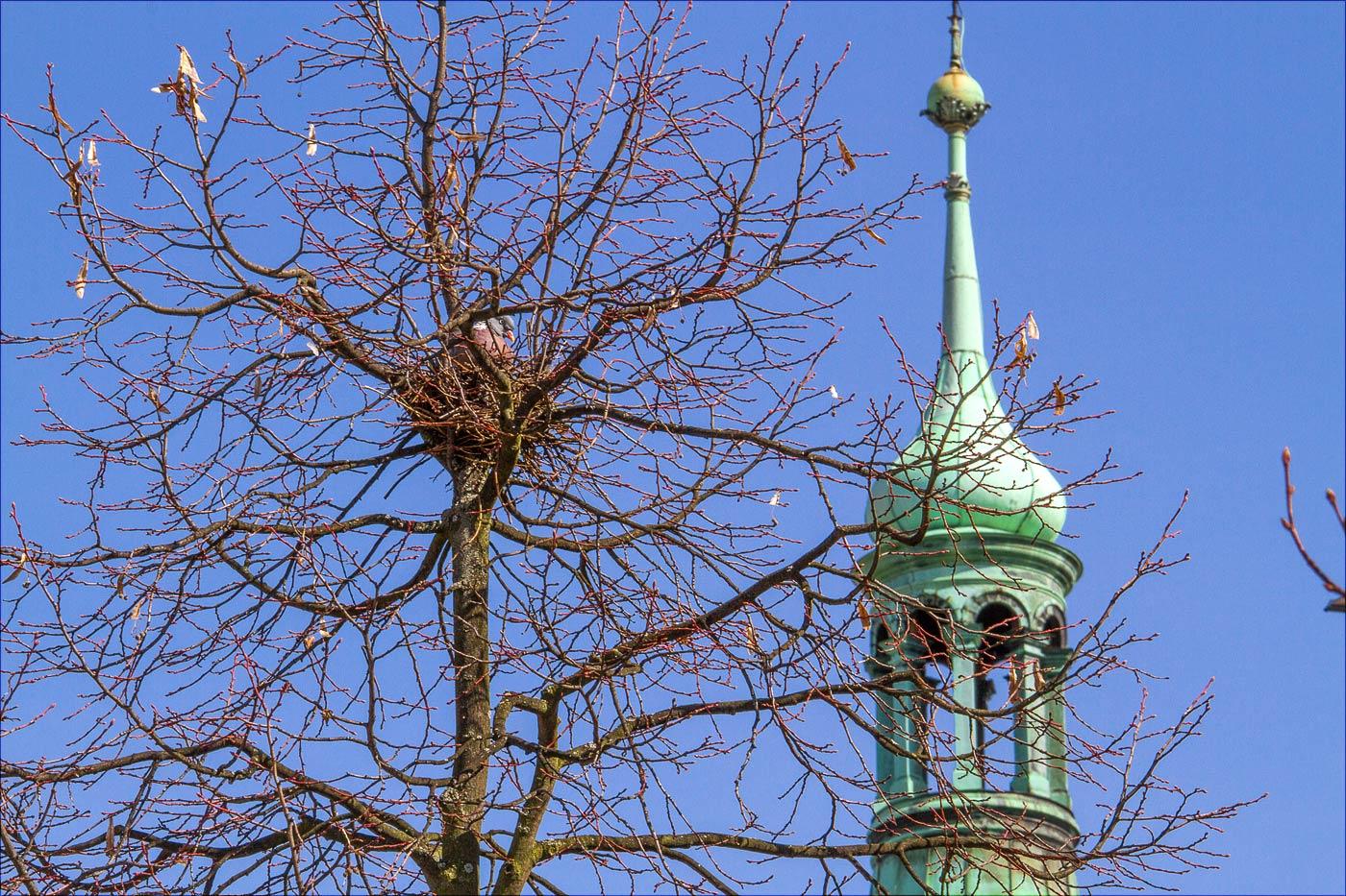 Бенешов, голубь на дереве на центральной площади