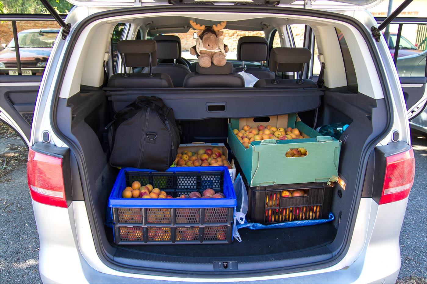 Моравский урожай абрикос и персиков