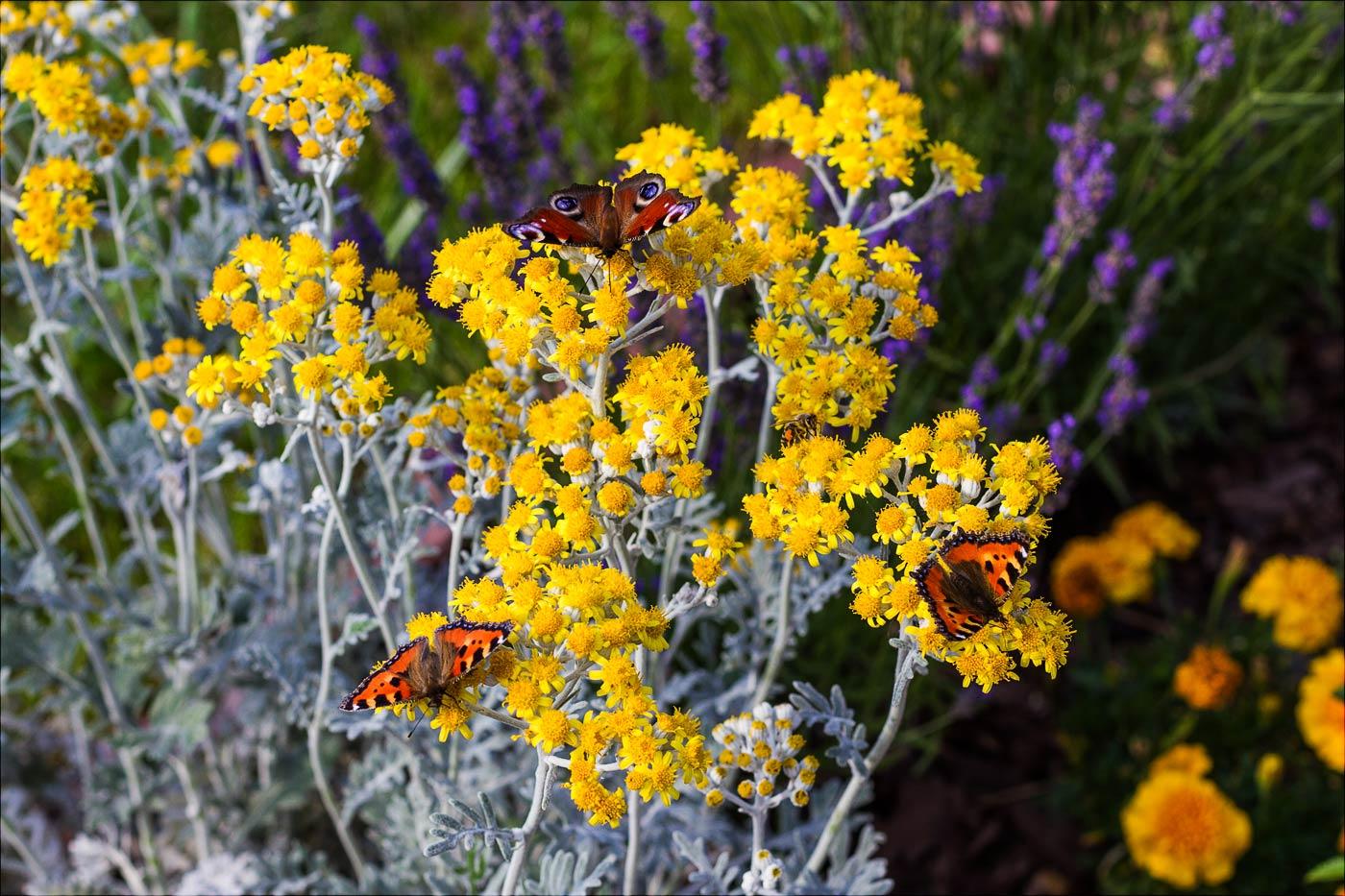У нас во дворе: Июльское цветение