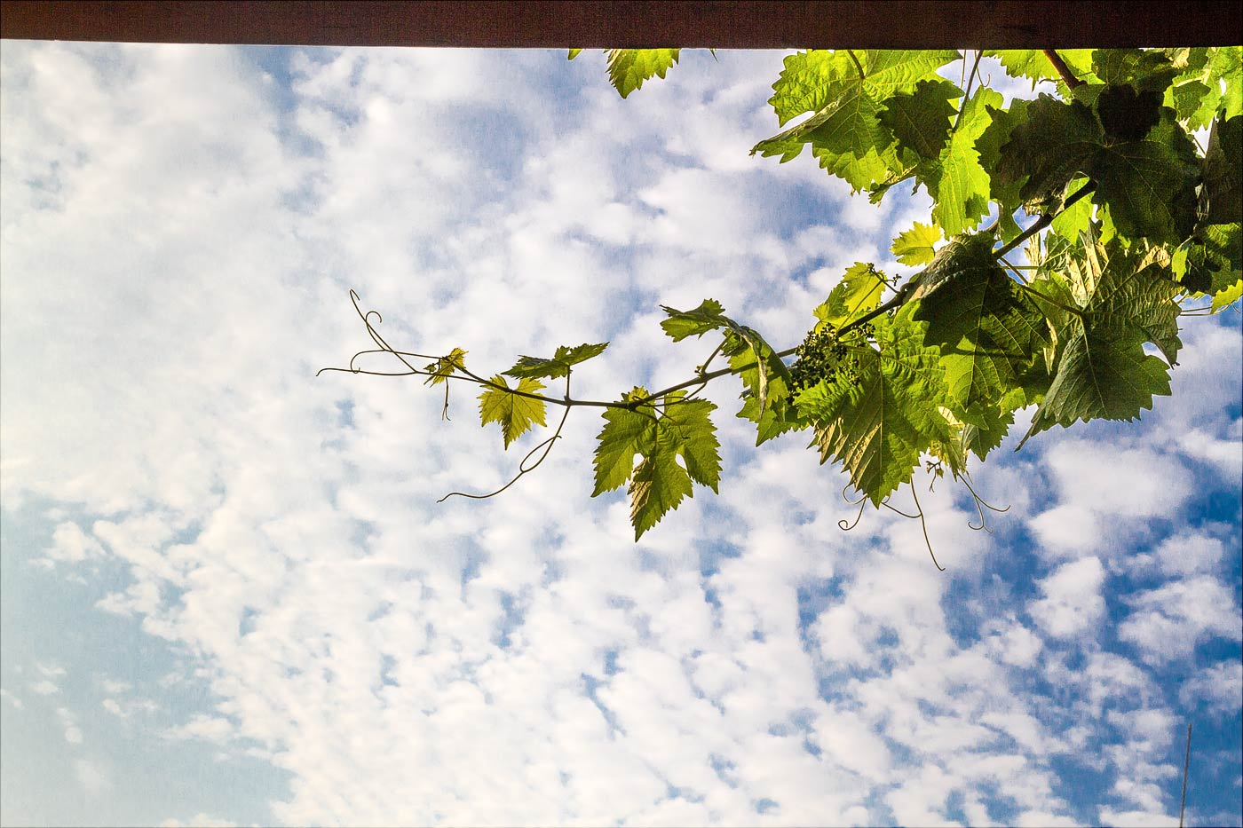 Утренний вид в балконном окне