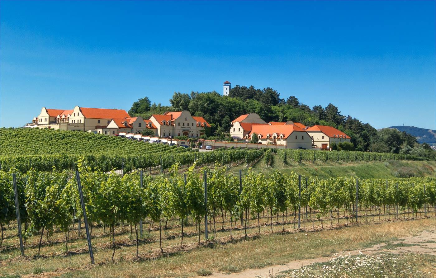 Отель и виноградарство