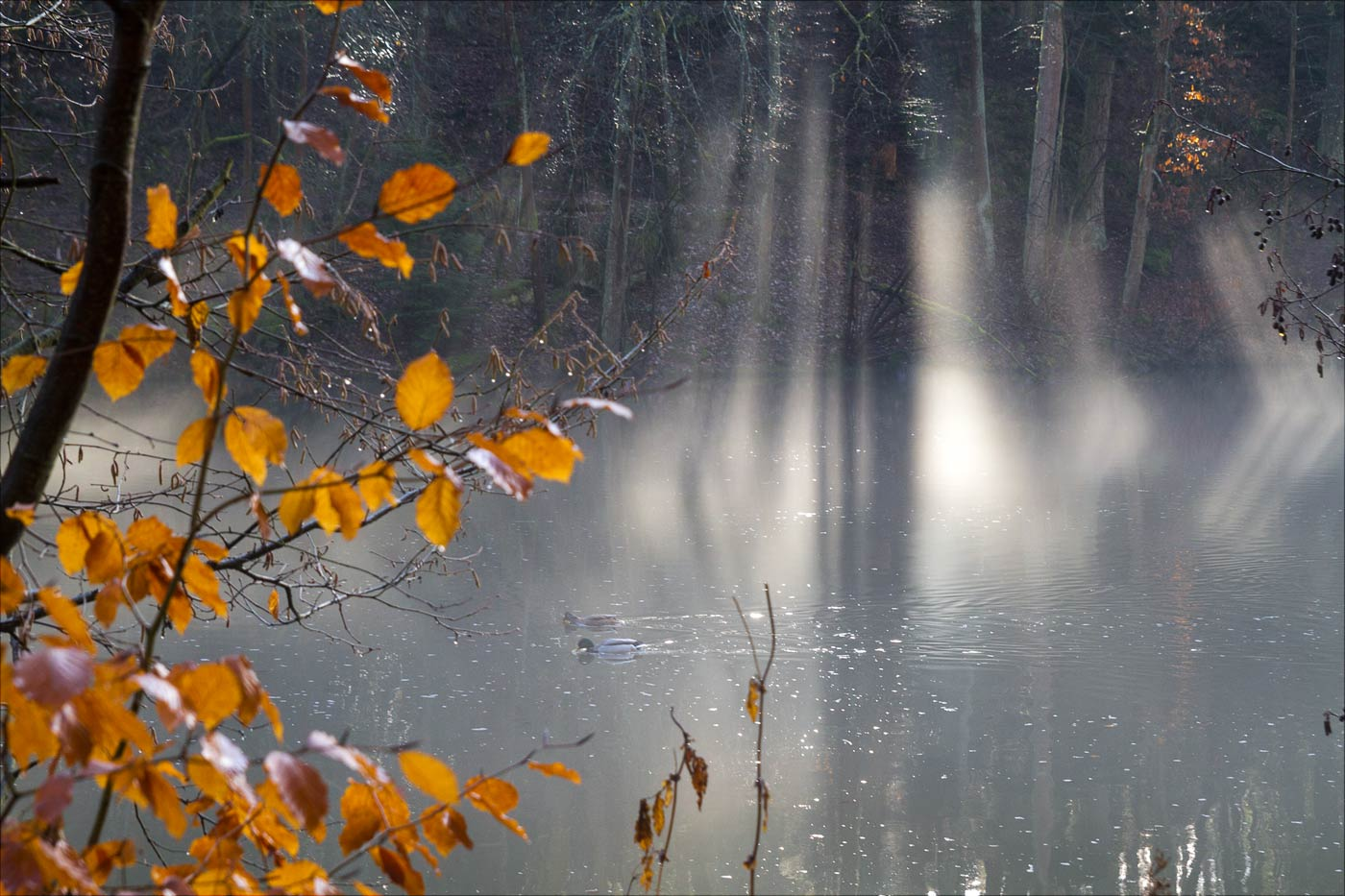Солнце и туман над рекой Лужнице
