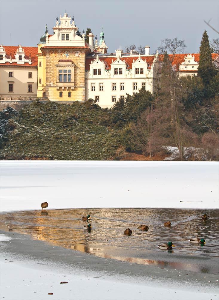 Утки на озере в Прогоницком парке