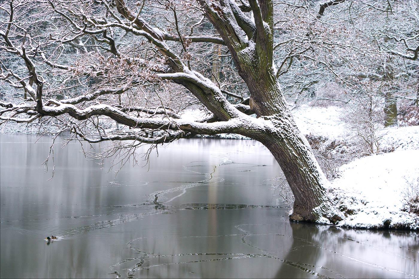 Снежный зимний день в Пругоницком парке
