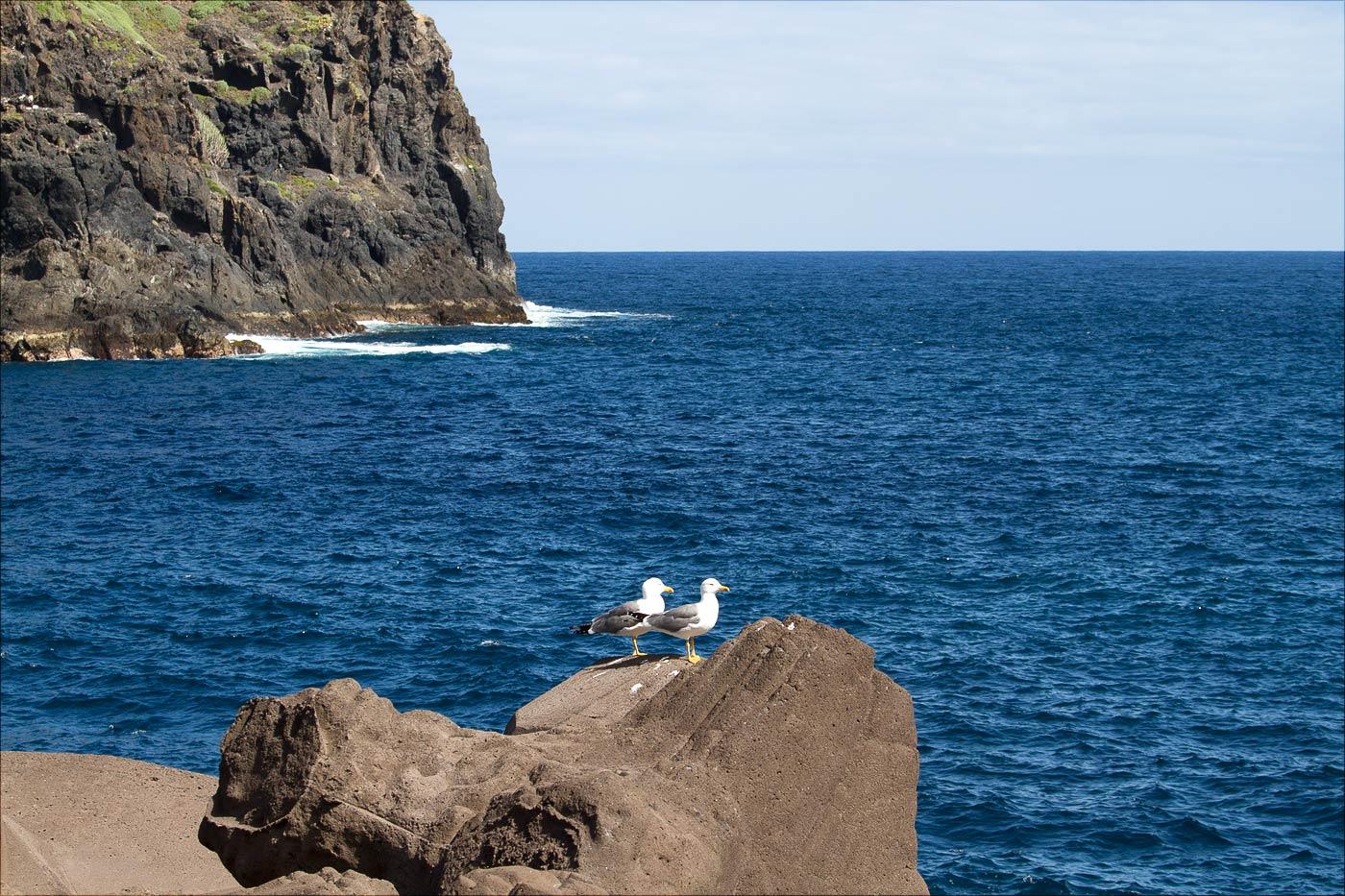 Чайки на набережной Гарачико у скального острова