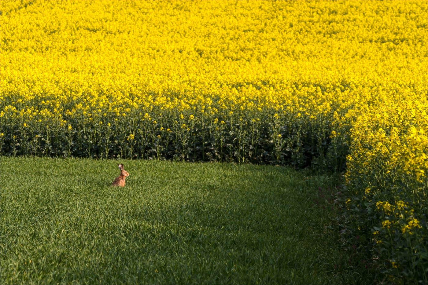 Заяц греется на солнышке