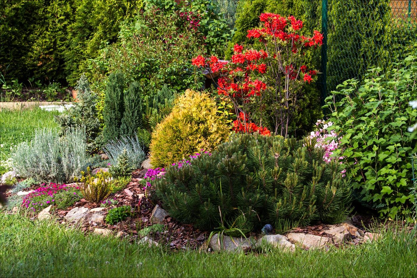 Альпийская горка в нашем саду