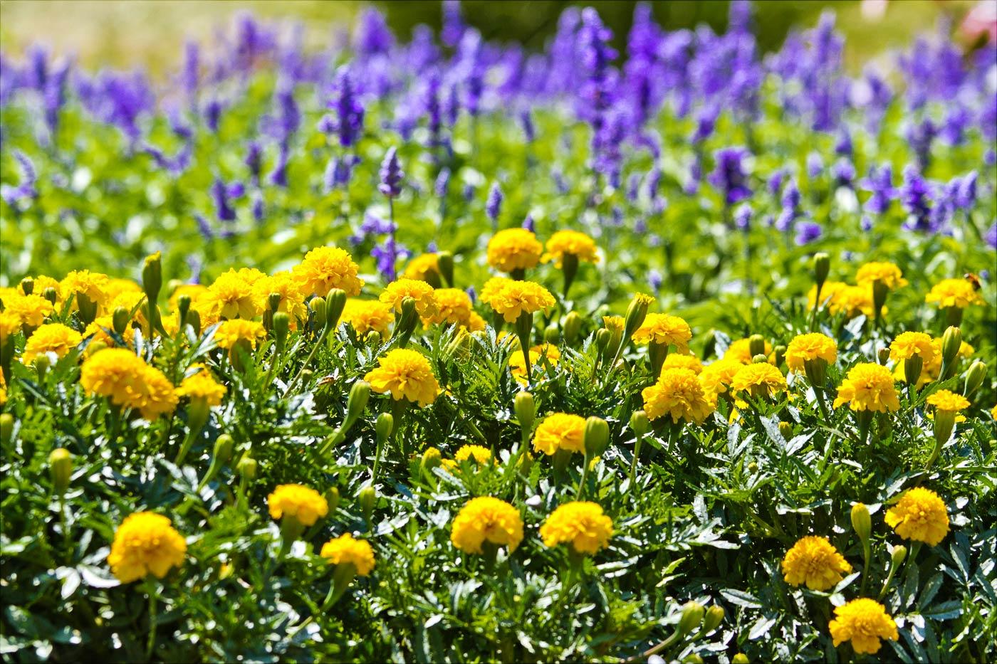 Цветник в дворцовом парке Леднице