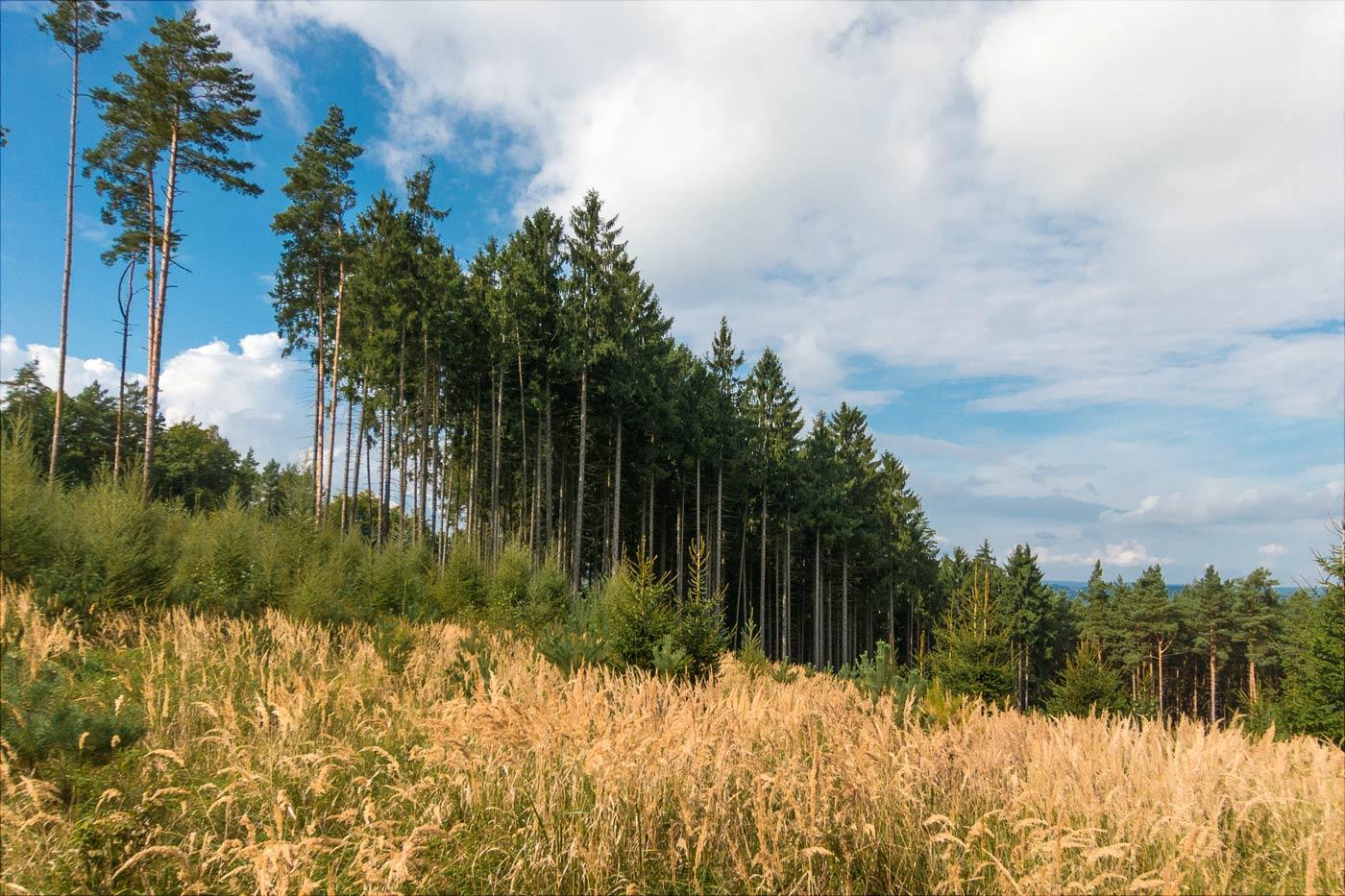 Поход за грибами, край леса