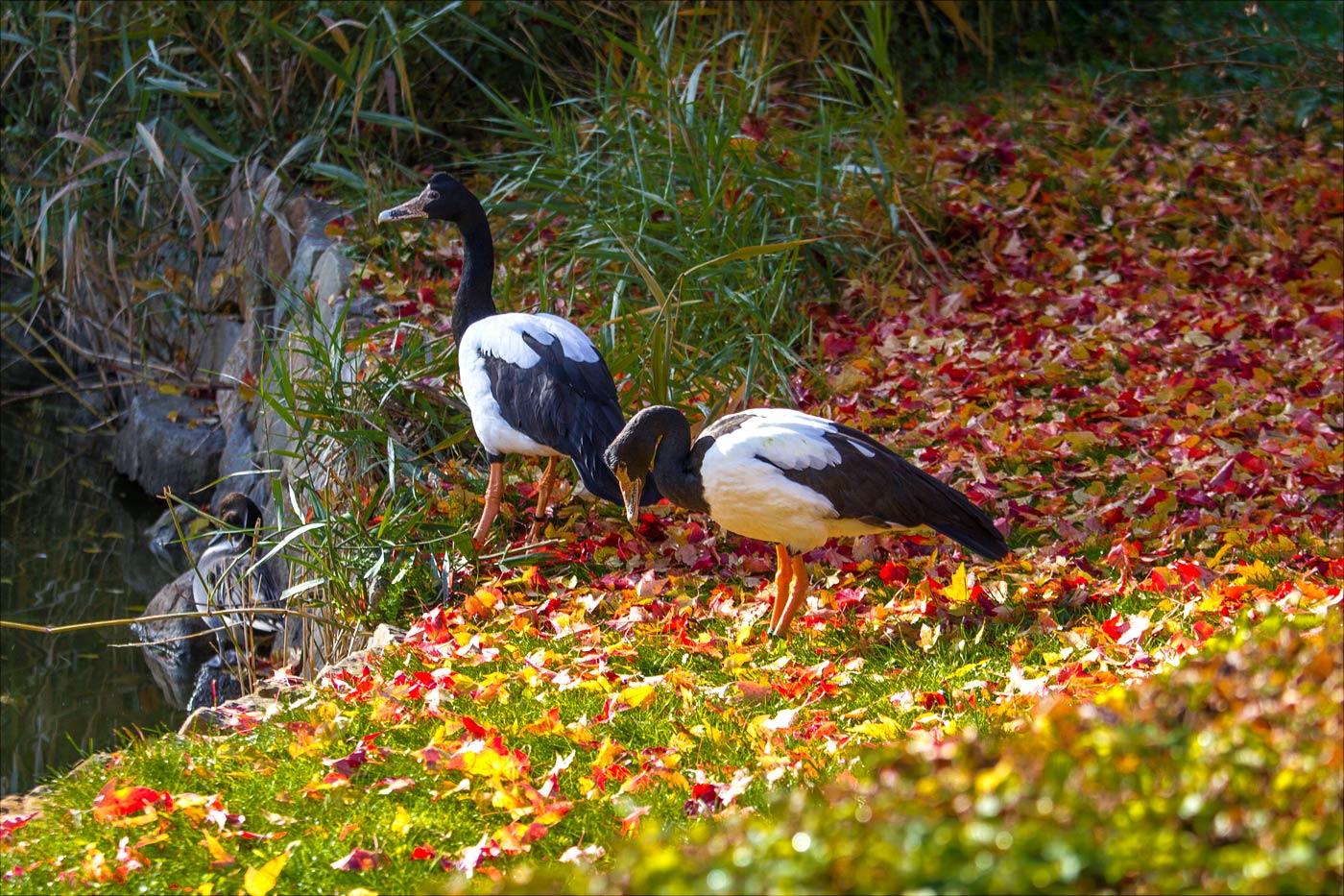 Осень в Злинском зоопарке