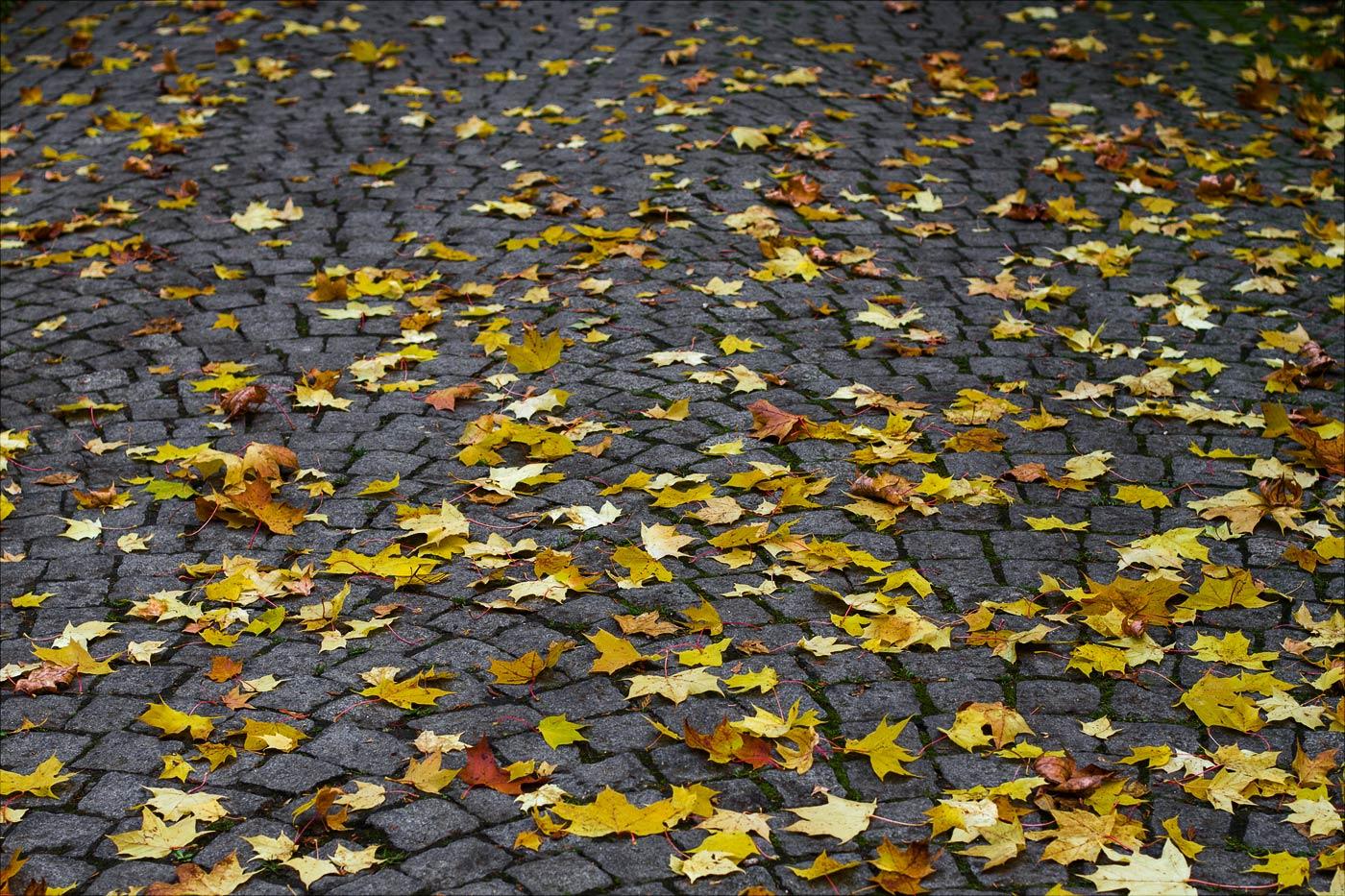 Последняя опавшая листва